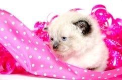 逗人喜爱的小猫粉红色丝带 库存图片