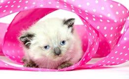 逗人喜爱的小猫粉红色丝带 免版税库存照片