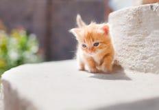 逗人喜爱的小猫红色 库存照片