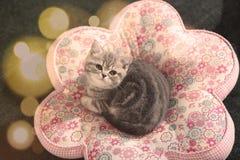逗人喜爱的小猫面孔Bokeh 库存照片