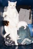 逗人喜爱的小猫从母亲乳房吮牛奶 免版税库存图片