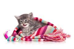 逗人喜爱的小猫 免版税库存照片