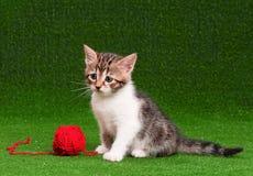 逗人喜爱的小猫 图库摄影