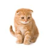 逗人喜爱的小猫 库存照片