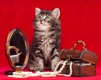 逗人喜爱的小猫 库存图片