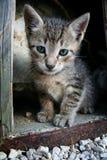 逗人喜爱的小猫 免版税库存图片