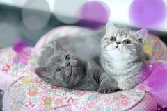 逗人喜爱的小猫Bokeh作用 库存图片