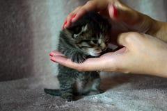 逗人喜爱的小猫s最近出生的` 免版税图库摄影