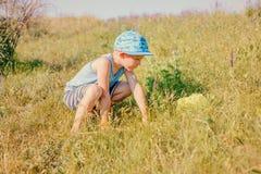 逗人喜爱的小男孩传染性的昆虫在草甸 免版税库存照片