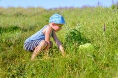 逗人喜爱的小男孩传染性的昆虫在草甸 库存照片