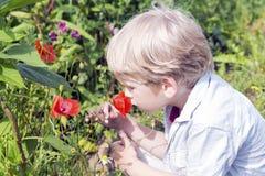 逗人喜爱的小男孩嗅到一朵狂放的pooy花 免版税库存图片