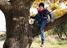 逗人喜爱的小男孩坐树分支在晴朗的秋天天 库存图片
