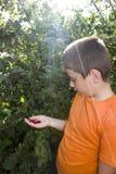 逗人喜爱的小男孩用莓果樱桃在他的手上 免版税图库摄影