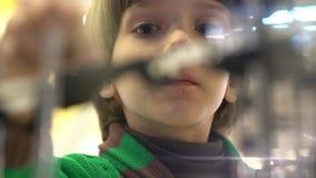逗人喜爱的小男孩看与经历小的大理石的复杂迷宫 影视素材