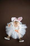 逗人喜爱的小的兔宝宝 库存照片
