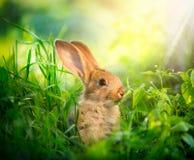 逗人喜爱的小的复活节兔子 库存图片