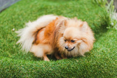 逗人喜爱的小的小狗 免版税库存照片