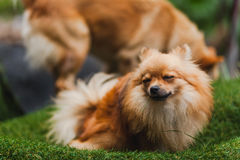 逗人喜爱的小的小狗 免版税库存图片