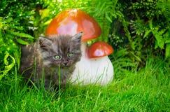 逗人喜爱的小的小猫在绿色夏天庭院里 库存照片