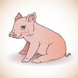 逗人喜爱的小的猪 免版税库存照片