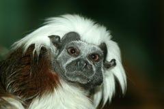 逗人喜爱的小的猴子 免版税库存照片
