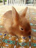 逗人喜爱的小的缎兔子 图库摄影