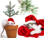 逗人喜爱的小的老鼠和猫与圣诞老人盖帽 免版税库存图片