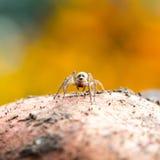 逗人喜爱的小的蜘蛛 图库摄影