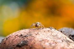 逗人喜爱的小的蜘蛛 库存图片