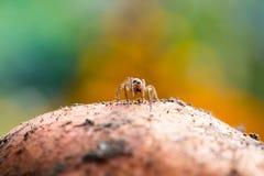 逗人喜爱的小的蜘蛛 免版税图库摄影