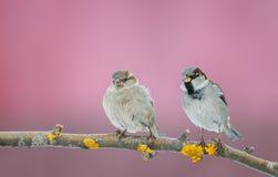 逗人喜爱的小的鸟麻雀在一棵树在庭院里坐a 库存照片