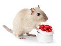 逗人喜爱的小的鼠标 库存图片