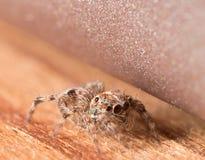 逗人喜爱的小跳的蜘蛛掩藏木表面上 免版税库存照片
