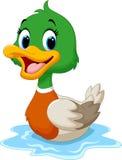 逗人喜爱的小鸭子举了它的翼 免版税图库摄影