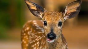 逗人喜爱的小鹿 库存图片