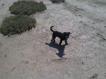 黑逗人喜爱的小pappie和biger遮蔽自然背景 库存照片