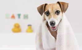 逗人喜爱的干净的狗 免版税库存照片