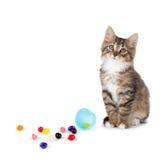 逗人喜爱的平纹小猫在溢出的软心豆粒糖旁边坐白色 免版税图库摄影