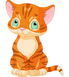 逗人喜爱的平纹小猫 库存图片