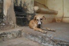 逗人喜爱的幼小狗,果阿旧城 免版税库存照片