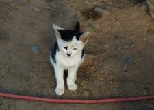 逗人喜爱的微小的猫 图库摄影