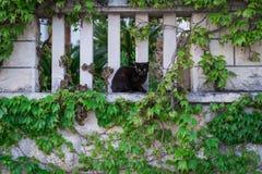 逗人喜爱的恶意嘘声坐叶茂盛墙壁 库存图片