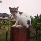 逗人喜爱的恼怒的猫 图库摄影
