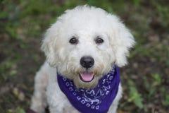 逗人喜爱的愉快的狗 免版税库存照片