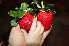 逗人喜爱的手接触草莓 库存照片