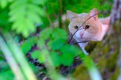 逗人喜爱的旗布猫 免版税库存图片