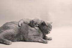 逗人喜爱的最近出生的小猫 库存照片