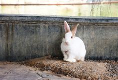 逗人喜爱的松弛兔子有自然背景 免版税图库摄影
