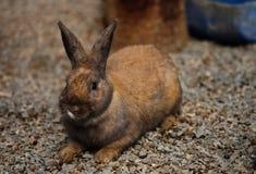 逗人喜爱的松弛兔子有自然背景 免版税库存图片