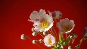 逗人喜爱的桃红色花
